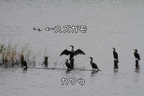 Img_6351
